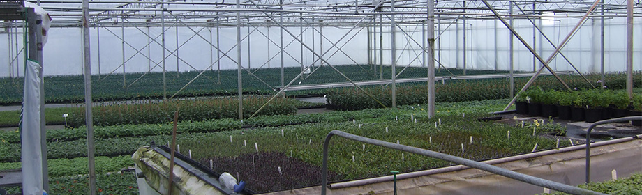 RHI Opportunities for Glass House Growers