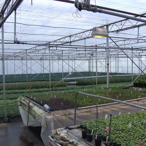 RHI Opportunities: Glass House Growers